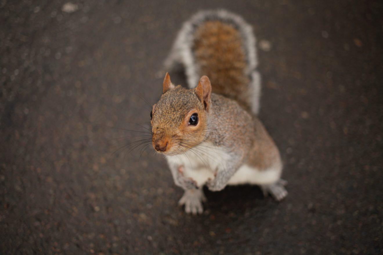 eran-menashri-nieuwsgierige eekhoorn-unsplash