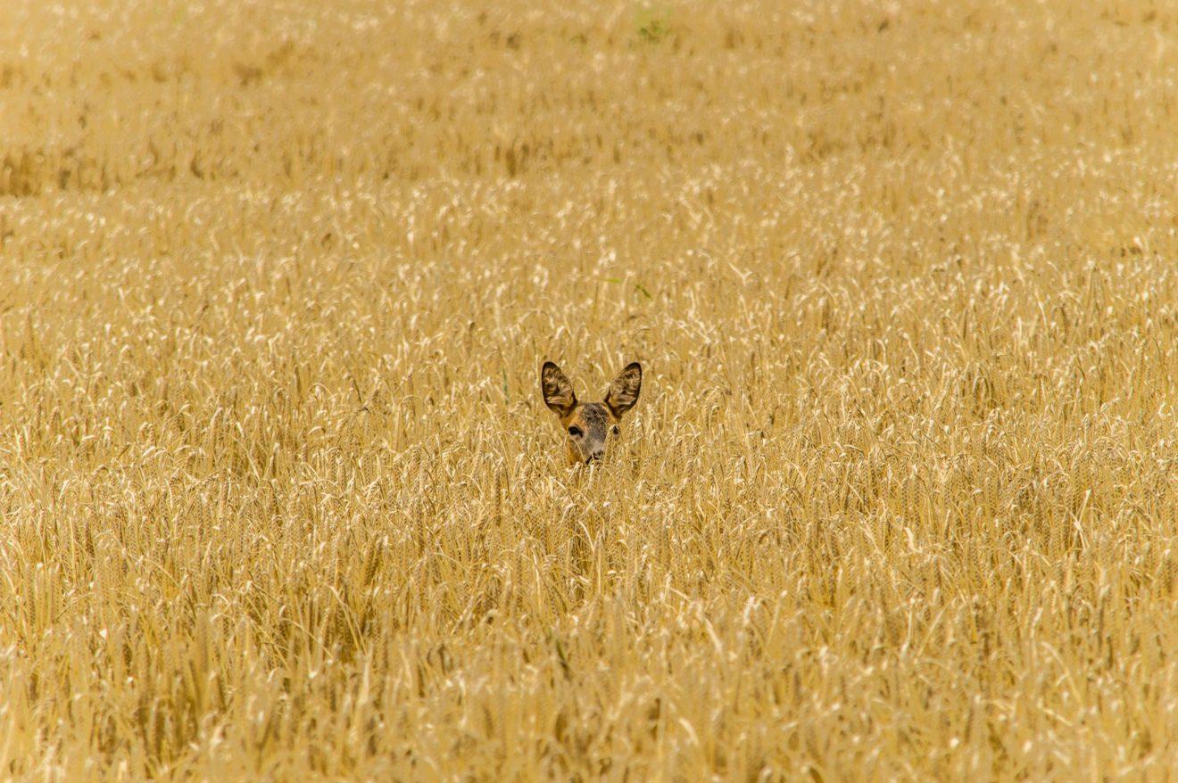 hannes-wolf--BVumYz08bE-unsplash